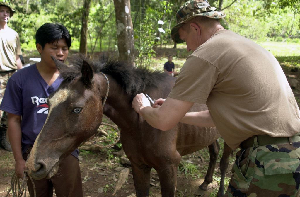US Army (USA) MASTER Sergeant (MSG) Mark Turner, 994th Medical Detachment, Texas Army Reserve, vaccinates a horse during the Veterinarian portion of a Medical Readiness Training Exercise (MEDRETE) at Quebrada Guabo, Panama (PN), during Exercise NEW HORIZONS 2003