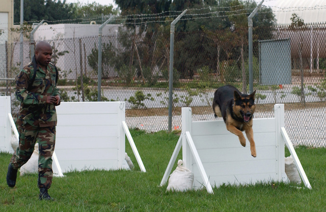 """US Navy (USN), MASTER-at-Arms Second Class (MA2) John Richardson, puts K-9 dog """"Loeki,"""" through a military K-9 obstacle course in support of Operation IRAQI FREEDOM"""