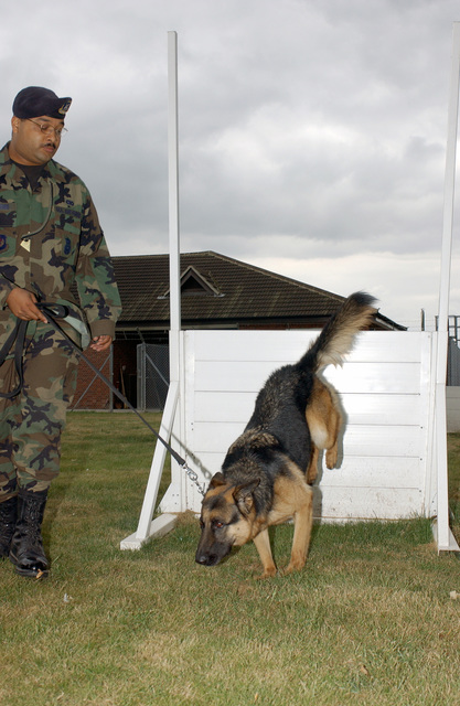 US Air Force (USAF) STAFF Sergeant (SSGT) Darrell Williams, a military working dog handler assigned to the 48th Security Forces Squadron (SFS), sends his partner Dan, over a window obstacle during obedience training held at Royal Air Force (RAF) Feltwell, United Kingdom (UK)