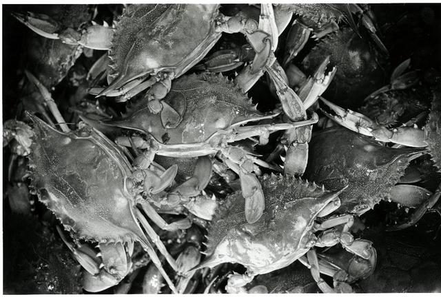 Environmental Images: 2004 - Seafood