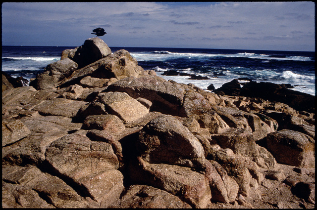 Library of Environmental Images, Office of Research and Development (ORD), September 1996 - Scenic/General - Bird in rocky coastline (CA)