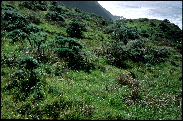 Library of Environmental Images, Office of Research and Development (ORD), September 1996 - Scenic/General - Grass and bushes at coastline (CA)