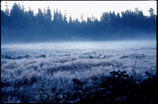 Library of Environmental Images, Office of Research and Development (ORD), September 1996 - Scenic/General - Frost-covered meadow with trees in background (CA)