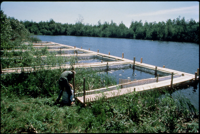 Library of Environmental Images, Office of Research and Development (ORD), September 1996 - Pesticides and Toxics - Le Herol Ponds pesticide studies at ERL-Duluth (MN)