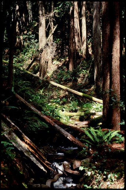 Library of Environmental Images, Office of Research and Development (ORD), September 1996 - Scenic/General - Stream running through redwoods and ferns (CA)