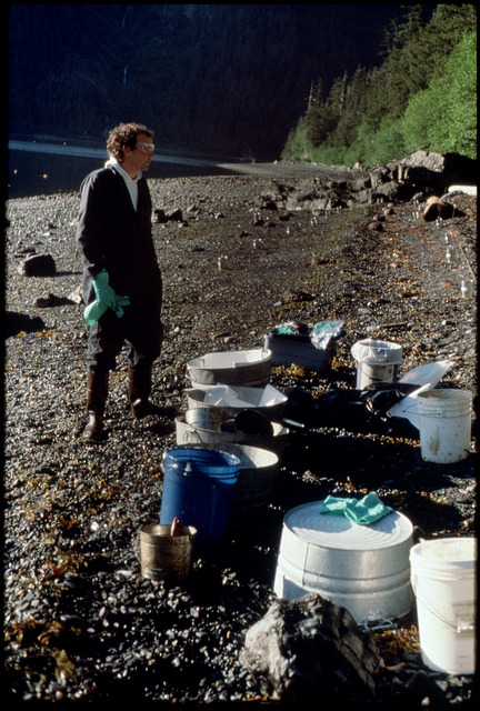 Library of Environmental Images, Office of Research and Development (ORD), September 1996 - Hazardous Waste - Worker looking over cleanup materials on beach