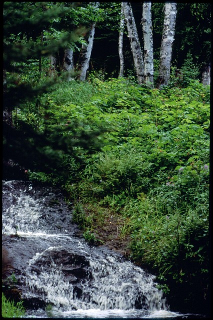 Library of Environmental Images, Office of Research and Development (ORD), September 1996 - Scenic/General - Brook running past bushes (Isle Royale, MI)