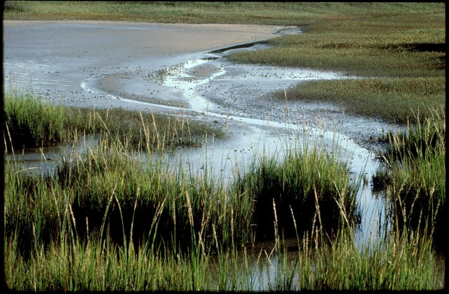 Library of Environmental Images, Office of Research and Development (ORD), September 1996 - Scenic/General - Tidal pools with marsh grass