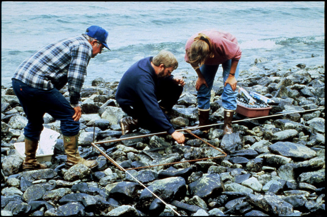 Library of Environmental Images, Office of Research and Development (ORD), September 1996 - Hazardous Waste - Workers testing effectiveness of bioremediation on oil covered rocks (AK)