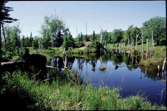 Library of Environmental Images, Office of Research and Development (ORD), September 1996 - Scenic/General - Trees in wetlands (NY)