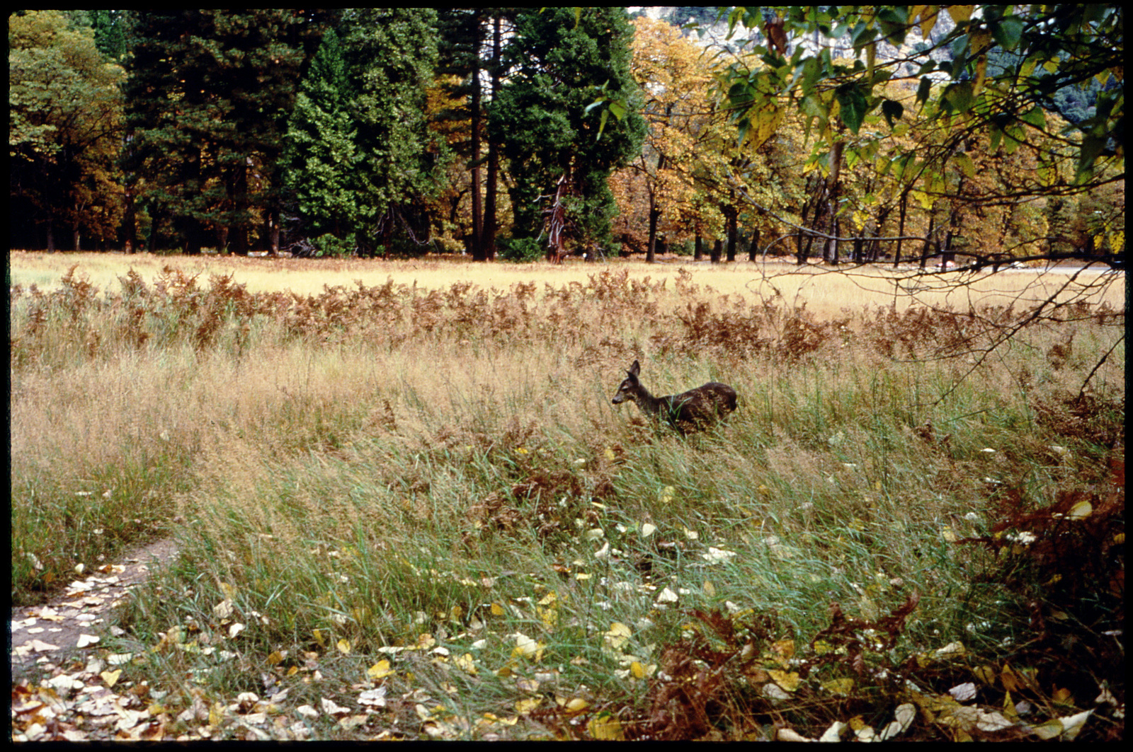 Library of Environmental Images, Office of Research and Development (ORD), September 1996 - Scenic/General - Deer in autumn meadow