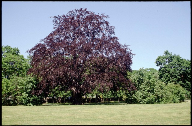 Library of Environmental Images, Office of Research and Development (ORD), September 1996 - Scenic/General - Tree in a park (RI)