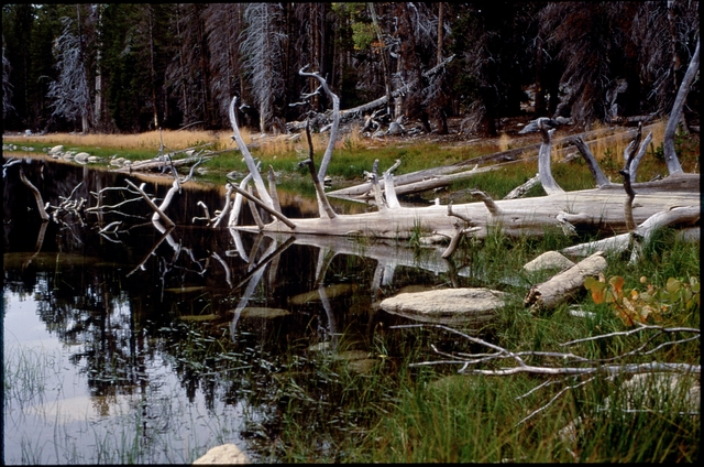 Library of Environmental Images, Office of Research and Development (ORD), September 1996 - Scenic/General - Fallen tree in lake (Harden Lake, CA)