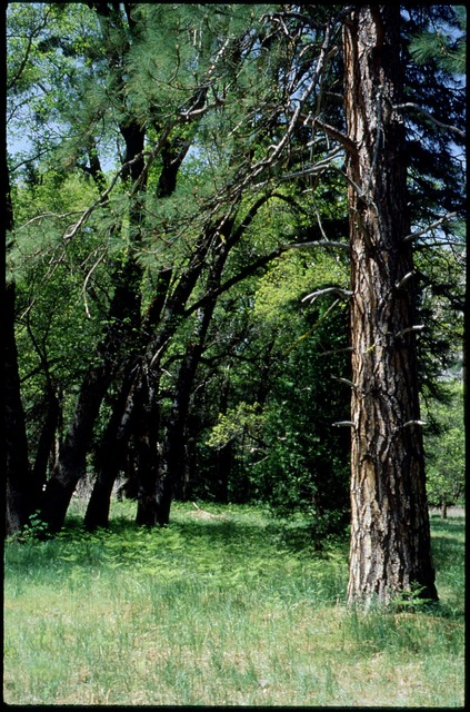 Library of Environmental Images, Office of Research and Development (ORD), September 1996 - Scenic/General - Meadow surrounded by trees (CA)