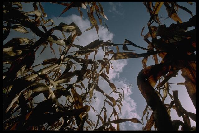 WEB Environmental Photos, May 6, 1996