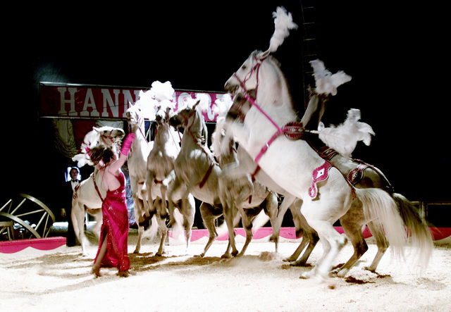 Nellie Hanneford shows off her trained Lippizzans horses at the Hanneford Circus show at Fort Gordon, Georgia.  These horses are the oldest breeds of horses in Europe. (U.S. Army PHOTO by Marlene Thompson, CIV) (Released)