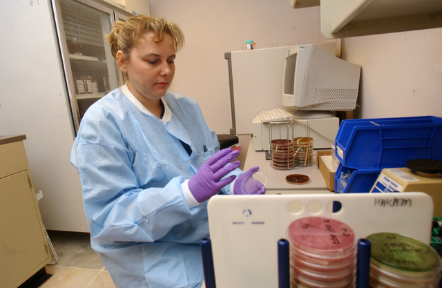 Kathy Shoemaker, a laboratory technician with the 39th Medical Squadron, checks a stool sample in a petri dish at Incirlik Air Base, Turkey, on Nov. 3, 2004. The sample she is checking is part of a diarrhea study being conducted by the Navy Medical Research Unit 3, which is measuring the impact that Enteric Disease (traveler's diarrhea) has on the mission. (USAF PHOTO by SENIOR AIRMAN Dallas Edwards) (Released)