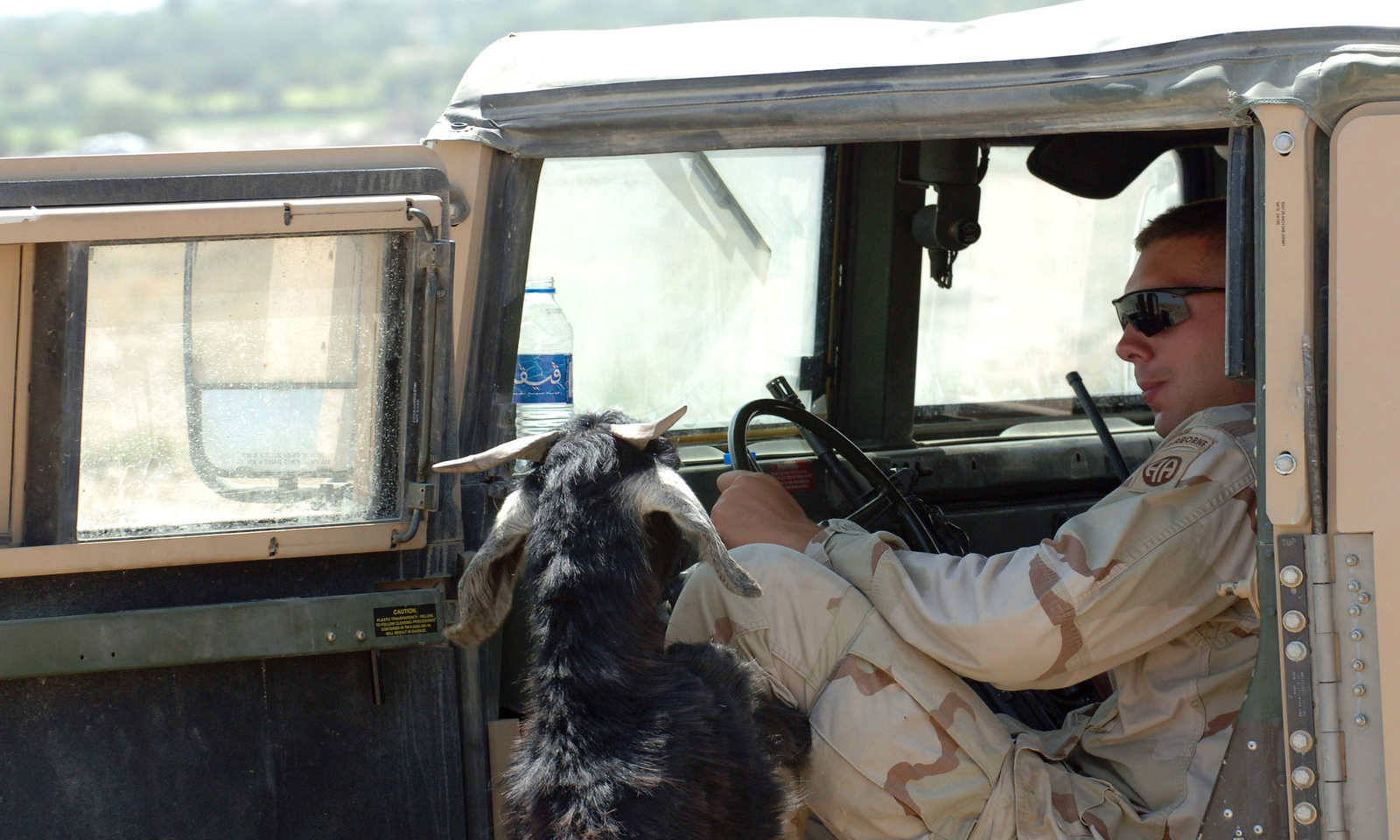 A local Afghan goat decides to say hello to a US Army (USA) Soldier