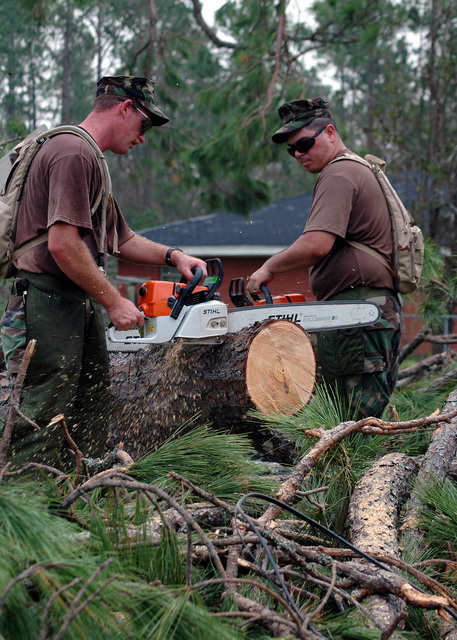 US Navy (USN) Seabees use chainsaws to cut fallen trees into manageable sizes for removal in Gulfport, Mississippi (MS). The Navy's involvement in the Hurricane Katrina Humanitarian Assistance Operations is led by the Federal Emergency Management Agency (FEMA), in conjunction with the Department of Defense (DoD)
