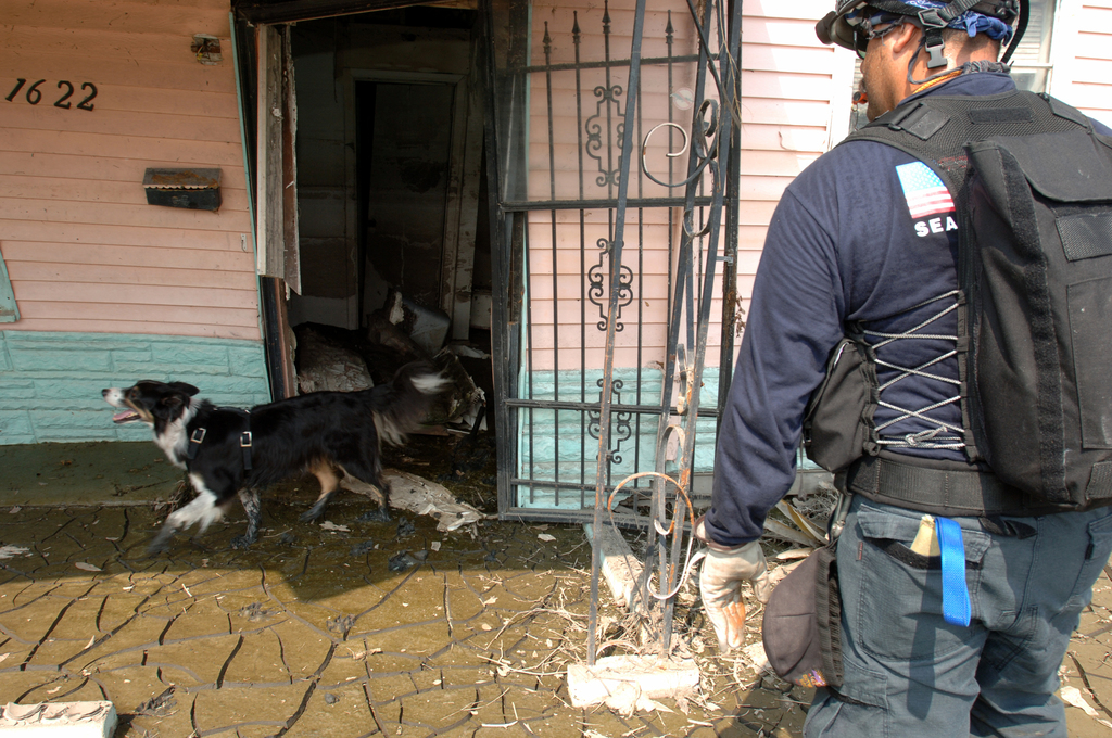 [Hurricane Katrina] New Orleans, LA, September 19, 2005 -- FEMA Urban Search and Rescue Task Force members search houses with their rescue dogs in neighborhoods impacted by Hurricane Katrina.  Jocelyn Augustino/FEMA
