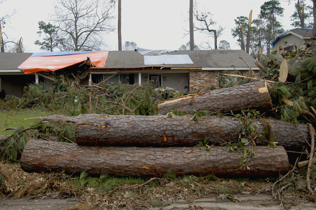 [Hurricane Rita] Lake Charles, LA, September 30, 2005 -- Fallen pine trees, now sectioned and stacked for removal, frame a home that suffered roof damage from Hurricane Rita.  Tree damage and loss in this area of the state affected by the storm is severe.  Win Henderson / FEMA