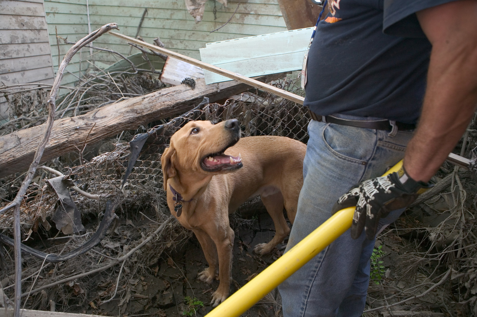 [Hurricane Katrina] New Orleans, LA., 10/15/2005 -- New Orleans Firefighter, Autrey Plaisance, and yellow labrador retriever, Finn, take a break from searching homes for missing people in the Lower 9th Ward following devastating Hurricane Katrina.  FEMA photo/Andrea Booher