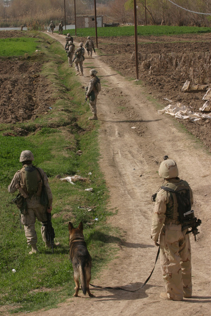 On March 2, 2006, Marines with 3rd Platoon, 2nd Battalion, 6th Marines (2/6), Regimenatl Comba tTeam 5, patrol through an open field in Fallujah, Iraq during Operation Jaws V. I MEF FWD and MNF-W conduct counter-insurgency operations with Iraqi Security Forces to isolate and neutralize Anti-Iraqi Forces, to support the continued development of Iraqi Security Forces, and to support Iraqi reconstruction and Democratic elections in order to create a secure government that enables Iraqi self-reliance and self-governance. (U.S. Marine Corps photo by CPL. Adaecus G. Brooks) (Released)