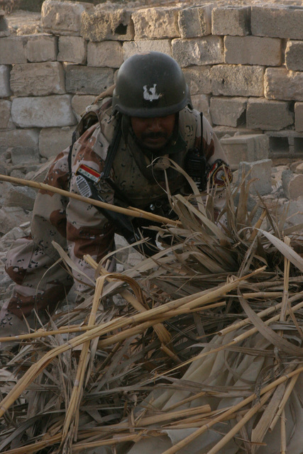 On March 16, 2006, an Iraqi Soldier with 2nd Battalion, 4th Brigade, 1ST Division, digs through twigs and dirt while patrolling through the Euphrates River area in Fallujah, Iraq. They are in search of weapon caches and any items that could be used to make improvised explosive devices (IED's) during Operation California Dreaming. RCT-5 is deployed with I MEF in support of Operation Freedom in the Anbar Province of Iraq (MNF-W) to develop the Iraqi Security Forces, facilitate the development of official rule of law through democratic government reforms, and continue the development of a market based ceremony centered on Iraqi Resurrection. (U.S. Marine Corps photo by CPL. Adaecus G....