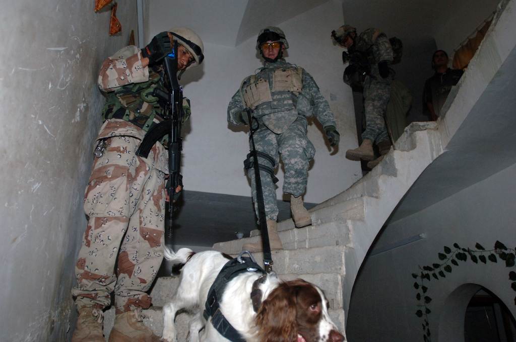In the town of Ameriyah, Iraq soldiers from 1ST Battalion, 87th Infantry Regiment and Iraqi soldiers conducted joint patrols on May 6, 2006. Ameriyah is known for having a large hidden insurgent presence. SPC. Robert Dami and his working dog Jay search a home for explosives.(U.S. Army photo by STAFF SGT. Kevin L. Moses Sr.) (Released)