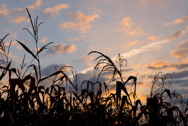 412_DSP_Agriculture_059