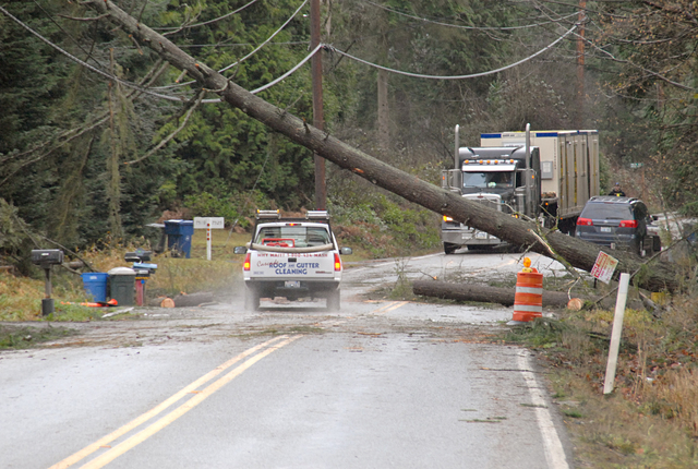 [Severe Winter Storm, Landslides, and Mudslides] Index, WA, 12-15-06 -- A pickup truck on HWY 9 goes under a tree pushed over and now being held off the ground by power lines.  The damage was a result of the Nov 14th Wind Storm.  Marvin Nauman/FEMA photo