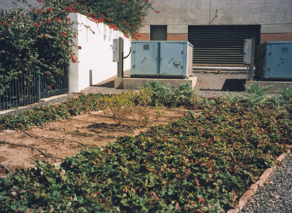 Sanaa - Ambassador's Residence - 1996