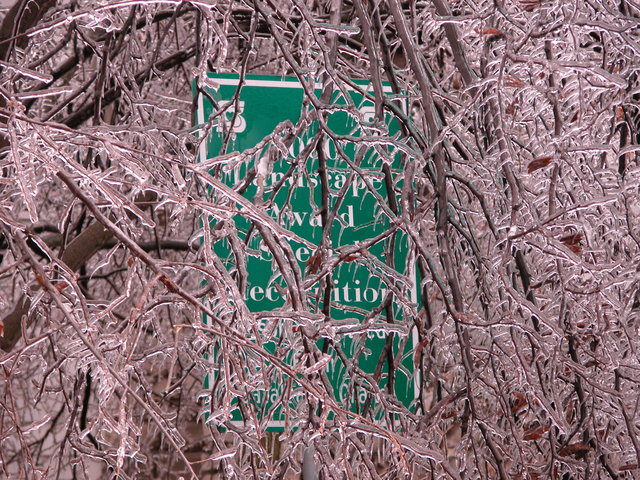[Severe Winter Storms and Flooding] Springfield, MO, 1-18-07 -- A landscaping award sign is shrouded in ice-covered branches in downtown Springfield, just days after the ice storm swept across 38 counties in Missouri.  FEMA Photo/Michael Raphael