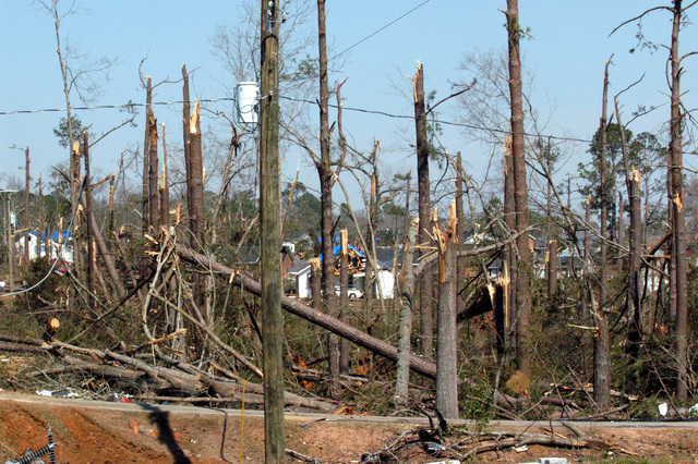 [Severe Storms and Tornadoes] Americus, GA, March 8, 2007 -- The tops of pine trees were snapped like twigs by the Georgia tornadoes.  The tornadoes caused extensive damage in Georgia.  Mark Wolfe/FEMA