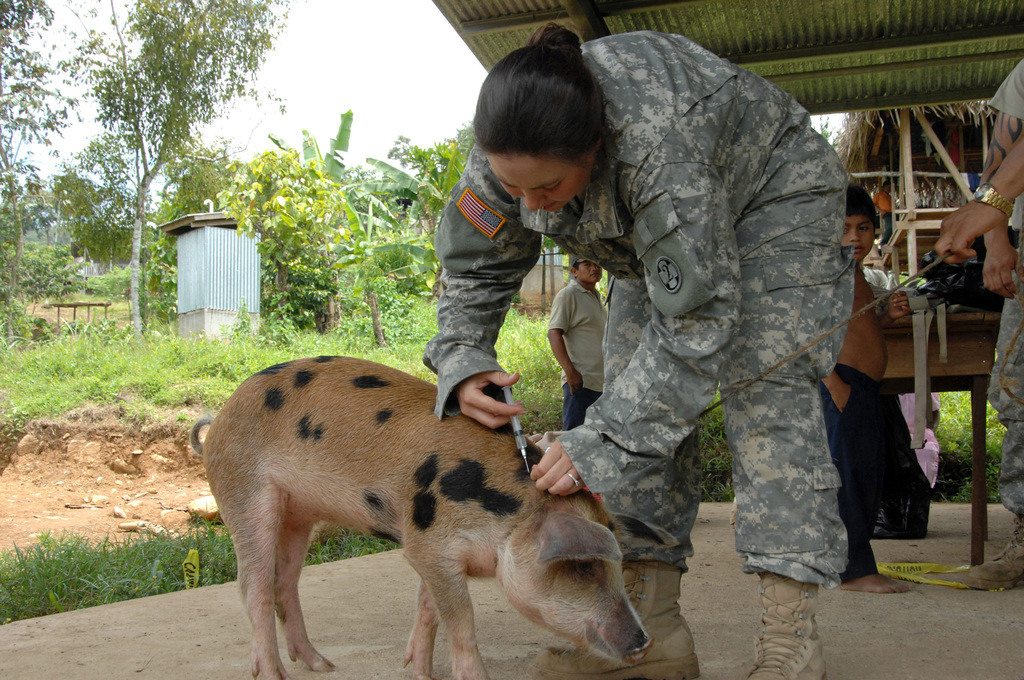 U.S. Army SPC. Misty Fox, a Veterinarian Technician, from 993rd Medical Detachment, Colorado Army National Guard (COARNG), vaccinates a pig during the Veterinarian portion of a Medical Readiness Training Exercise (MEDRETE) at Valle Seron, during Exercise New Horizons Panama 2007.  New Horizons Panama 2007 is a joint military humanitarian assistance exercise hosted by the United States and the Government of Panama. (U.S. Army PHOTO by Juan Torres-Diaz, CIV) (Released)
