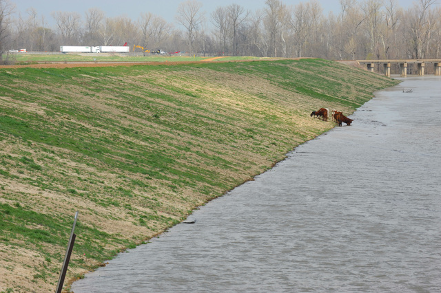 [Severe Storms, Tornadoes, and Flooding] West Memphis, AR, March 27, 2008 -- Flood waters remain high near the Mississippi River.  A pasture for the cows is covered in water.  The levee in West Memphis has received mitigation funding in the past from FEMA.  Jocelyn Augustino/FEMA