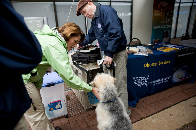 Washington, DC, May 20, 2008 -- Molly McPherson says hello to Tucker, John Shea's  dog, at the Pet Preparedness booth.  The booth is staffed by FEMA and The Humane Society of the United States to give residents information on pet preparedness.  FEMA is hosting a Hurricane Preparedness day at FEMA headquarters highlight the federal government's preparations for the 2008 Hurricane Season.  FEMA/Bill Koplitz