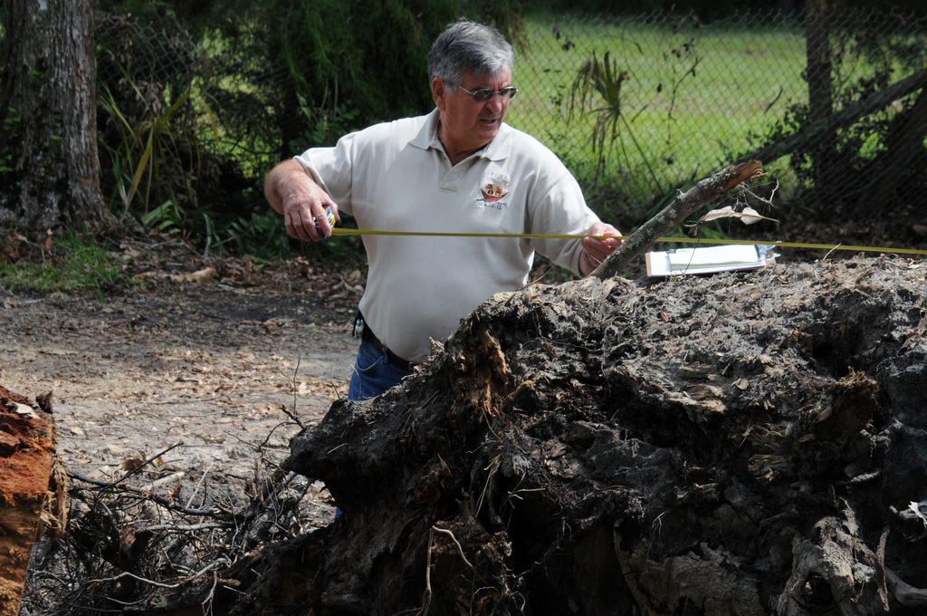 [Tropical Storm Fay] Hilliard, FL, September 18, 2008 -- As part of the Public Assistance(PA) funds eligibility process, FEMA Debris Specialist Ray White inspects a stump Nassau County has reported as needing extraction as result of Tropical Storm Fay. George Armstrong/FEMA