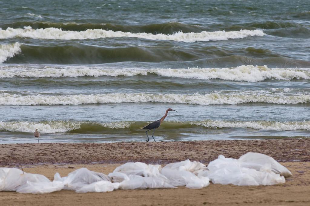 Office of the Administrator (Lisa P. Jackson) - BP Oil Spill (Web Photographs) - Oil washes ashore at Grand Isle State Park, Grand Isle, LA. USEPA photo by Eric Vance [412-APD-659-2010-06-04_GrandIsle_119.jpg]