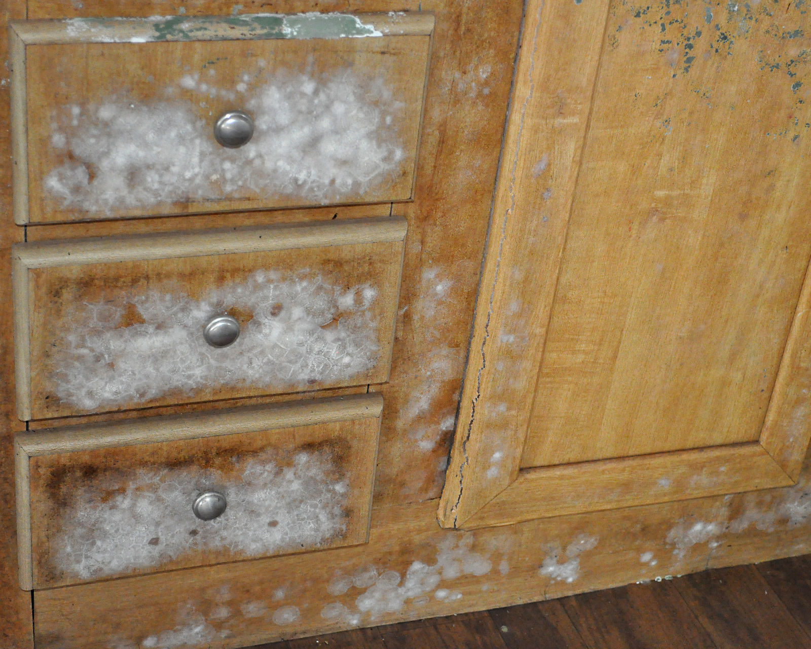 Flooding ^ Severe Storm - Memphis, Tenn. , May 28, 2011 -- Mold grows on the kitchen cabinets ...