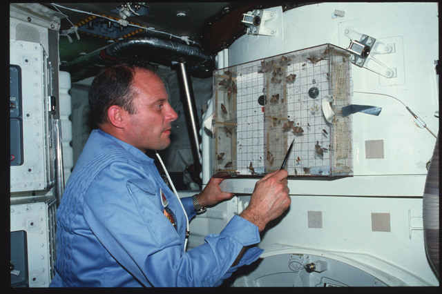 S03-23-174 - STS-003 - Commander Lousma examines Insect Flight Motion Study