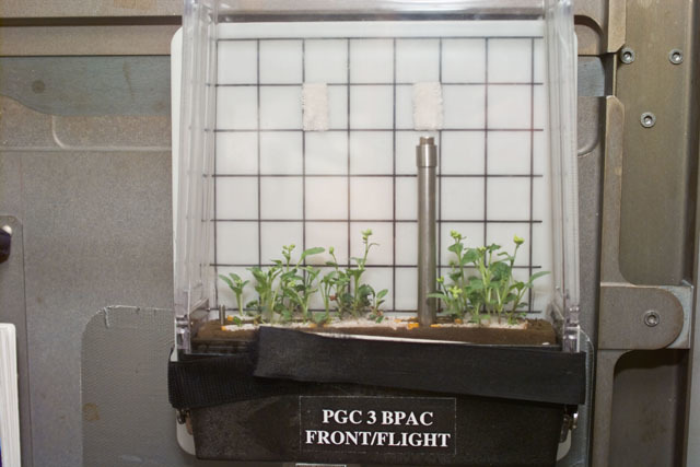 S87E5118 - STS-087 - ``CUE - B-PAC & B-STIC, documentation of Brassica rapa plants in PGCs``