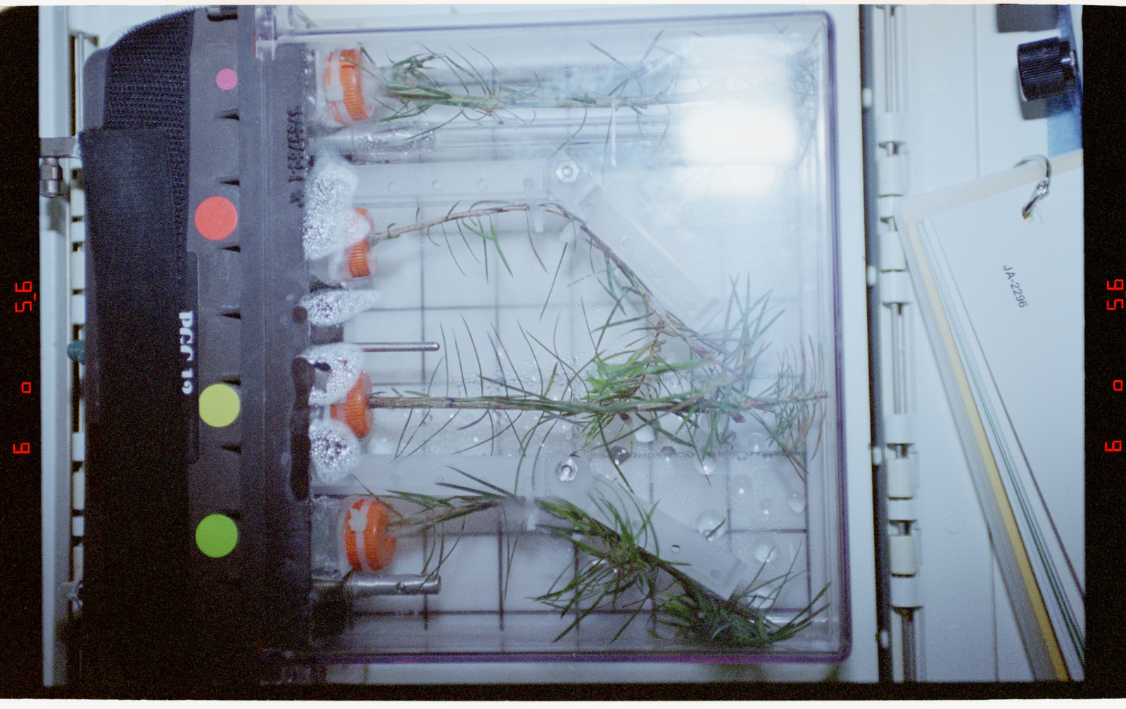 STS078-355-016 - STS-078 - PGF, Close-ups of tree seedlings on Life and Microgravity Sciences (LMS-1)