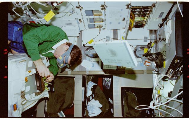STS087-333-028 - STS-087 - CUE - B-STIC, Kadenyuk works with the Brassica rapa plants