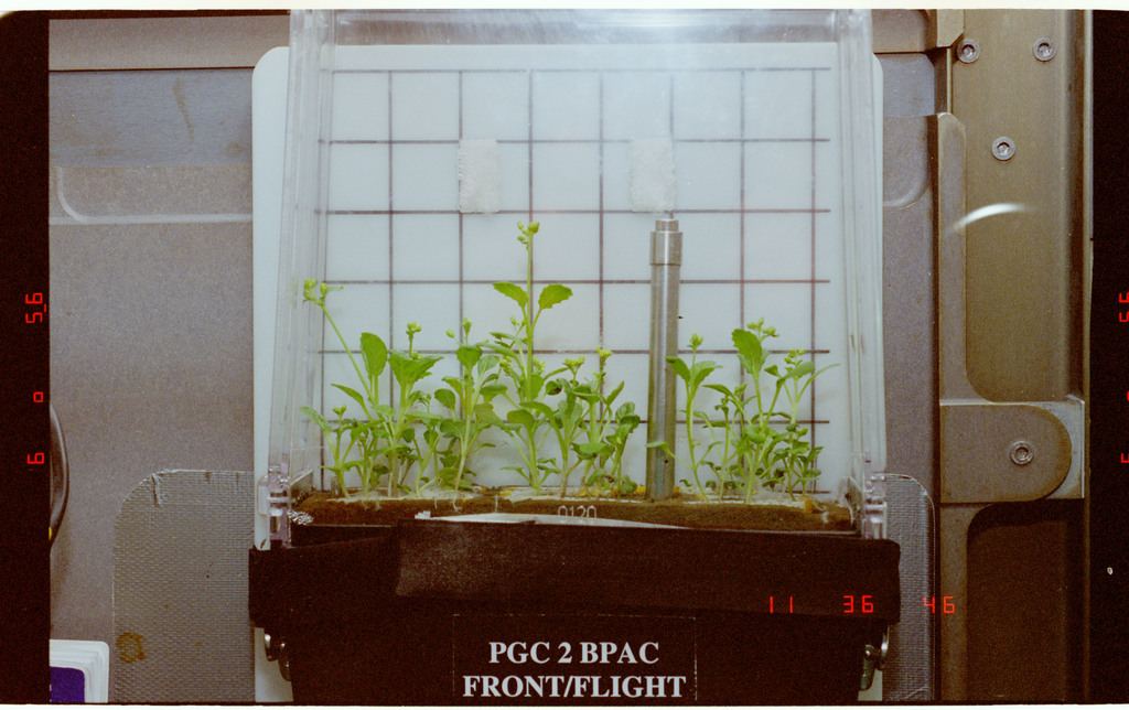 STS087-349-004 - STS-087 - CUE - BPAC, documentation of plants in PGC