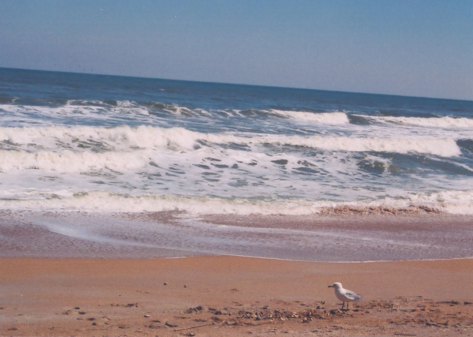 A1A Scenic and Historic Coastal Byway - A Seagull Out for a Stroll