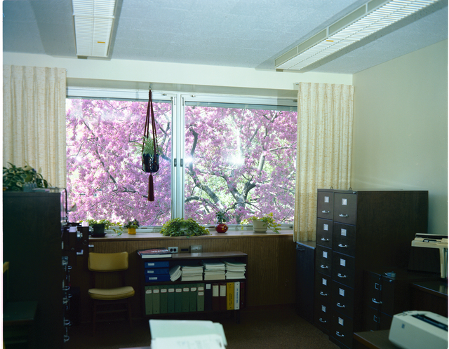 CINDY SZANCA OFFICE WINDOWS WITH TREES