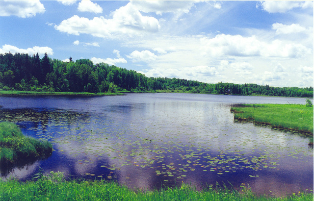 Edge of the Wilderness - Lilypads on Pughole Lake