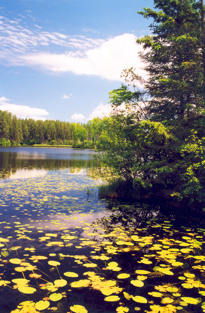 Edge of the Wilderness - Serene and Scenic Pughole Lake