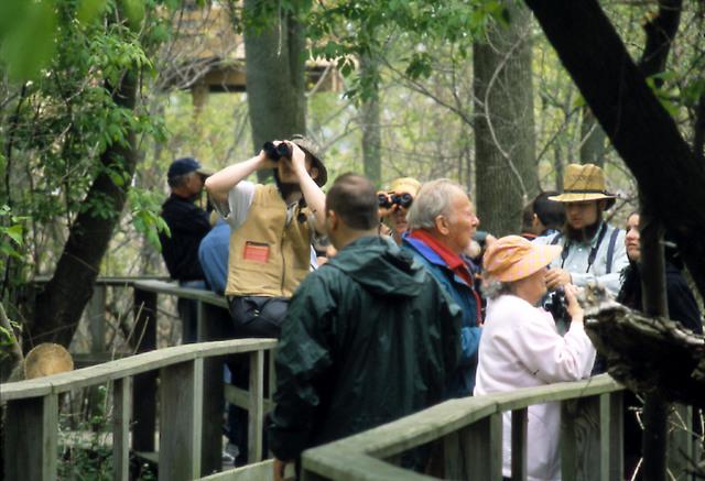Lake Erie Coastal Ohio Trail - Birdwatching at Magee Marsh Wildlife Area